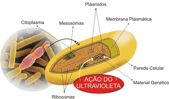 Acão germicida do ultravioleta